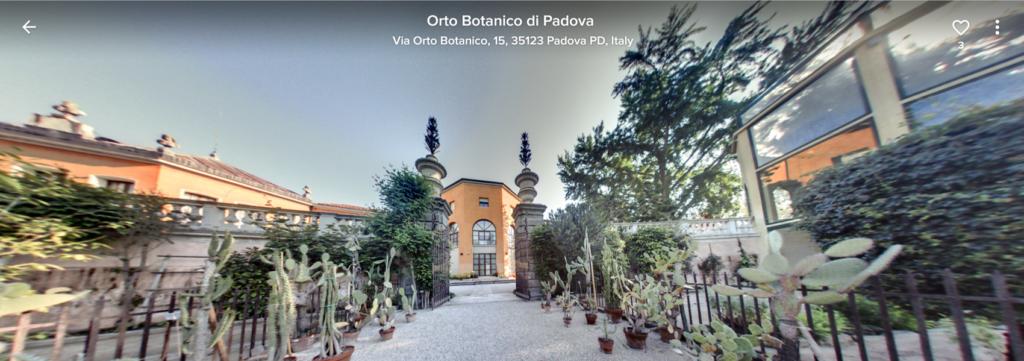 immagine Orto Botanico di Padove